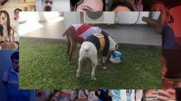 Fair Play Canino