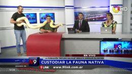 CHACO - Custodiar la fauna nativa
