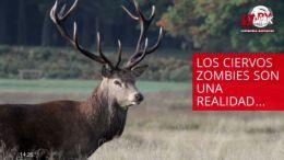 OCURRE EN NEVADA, ESTADOS UNIDOS | INTERNACIONALES | 11.10
