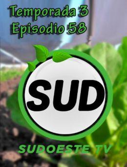 STV | T :3 | E :58
